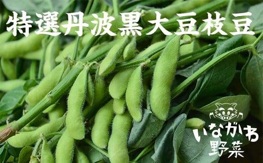 特選 丹波黒大豆枝豆(枝なし莢のみ1kg)