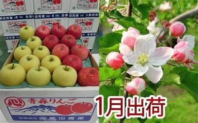 [№5898-0079]1月 贈答クラス津軽のりんご約5kg2種以上16~20玉(品種おまかせ)