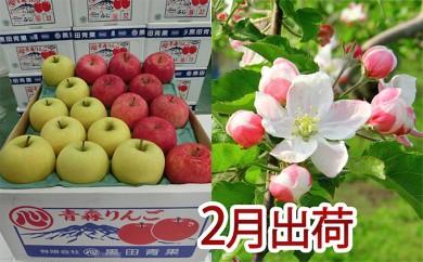 [№5898-0080]2月 贈答クラス津軽のりんご約5kg2種以上16~20玉(品種おまかせ)