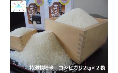 あわら市産コシヒカリ特別栽培米(2kg✕2)