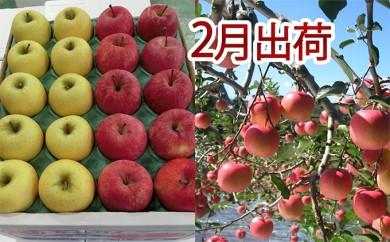 [№5898-0086]2月 家庭用津軽のりんご約10kg2種以上40~46玉(品種おまかせ)