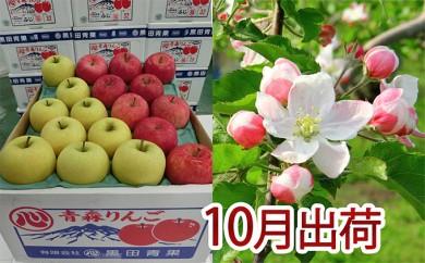 [№5898-0076]10月 贈答クラス津軽のりんご約5kg2種以上16~20玉(品種おまかせ)