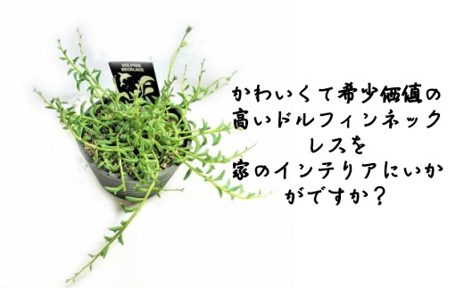 No.1075 観葉植物 ドルフィンネックレス