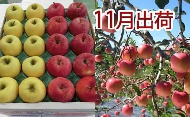 [№5898-0083]11月 家庭用津軽のりんご約10kg2種以上40~46玉(品種おまかせ)