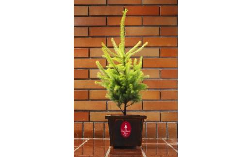 サンタランドツリー(30N-Ⅲ1)