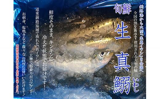 [Ka4旬-A115]【旬鮮生真鰯】イワシ 3.0kg詰め(25~35尾)