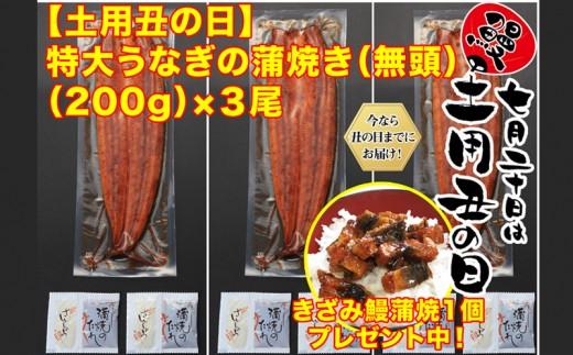 B2-0808/【土用の丑までにお届け】鹿児島県産特大うなぎの蒲焼き(無頭)200g×3尾