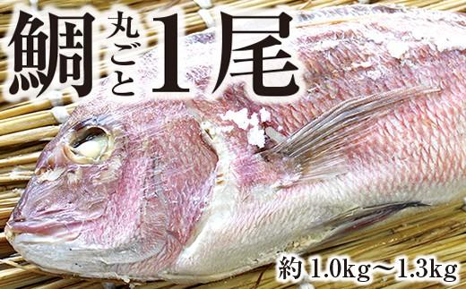 ◇鯛の上総蒸し【大きな真鯛が丸ごと1尾!】