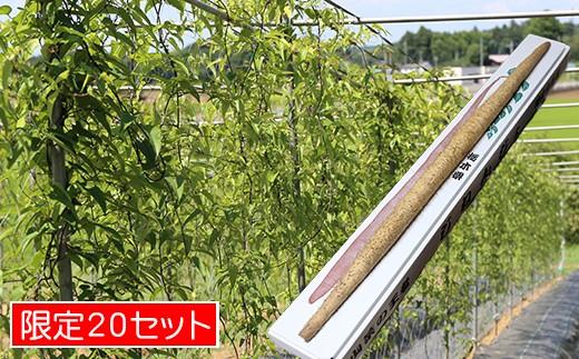 [№5666-0144]益子・まるほ農園の自然薯
