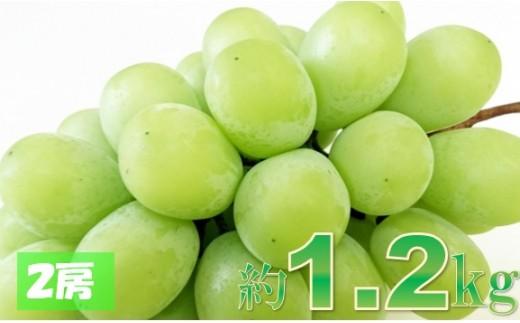 112 【糖度17度以上】三木町産シャインマスカット  約1.2kg