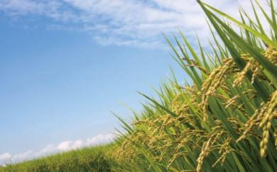 白河浪慢 有機栽培米 ひとめぼれ<農薬:栽培期間中不使用>5kg(2.5kg×2袋)×1回