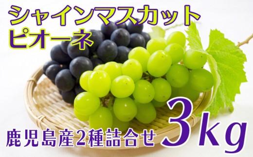 B2-0809/鹿児島産ぶどう 2種詰合せ3kg(シャインマスカット・ピオーネ)