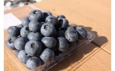 [大粒!希少!毎年大人気商品!/数量限定・期間限定]おまたせしました!淡路島で栽培した生食用「ブルーベリー」500g×2パック