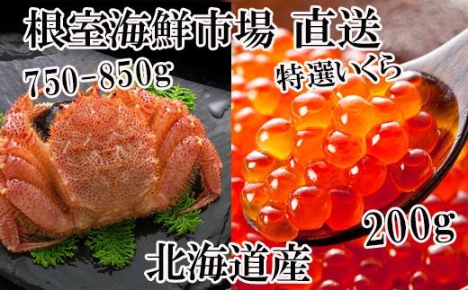 CB-42019 北海道産浜ゆで毛ガニ750~850g、いくら醤油漬