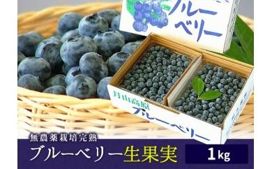 AT34 無農薬栽培ブルーベリー生果実1kg