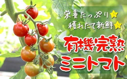 Z5-SV 【数量限定】有機JAS栽培 完熟ミニトマト1kg(サガンベジ)