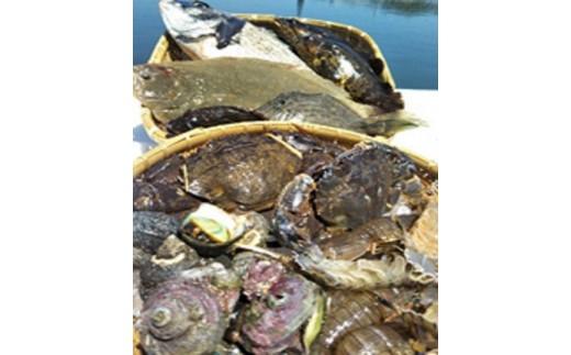 64 漁協直送!大村湾からの贈り物(季節の魚介類詰合せ)