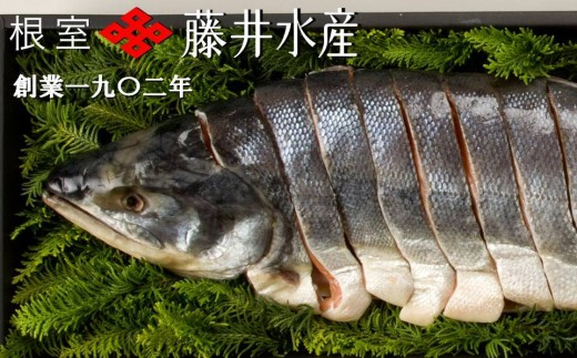 CA-23012 【北海道根室産】<鮭匠ふじい>新巻鮭姿切身