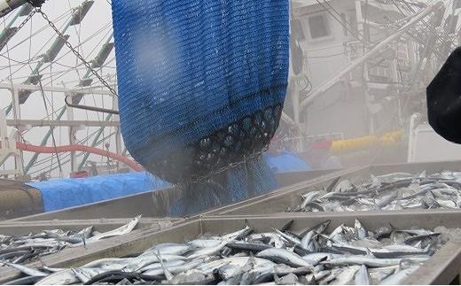 CC-02004 【北海道根室産】青魚いわしとさんま(計16缶)