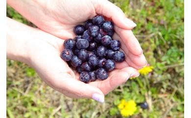 【数量限定】カルストの雫 ブルーベリー生果実450gX2