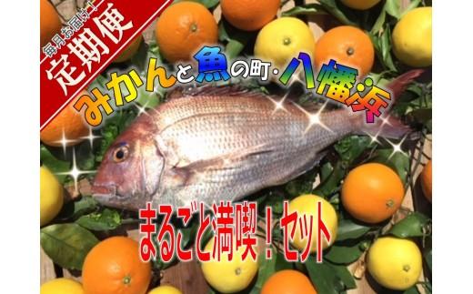 H14-9.どーや!「みかんと魚の町・八幡浜」まるごと満喫!定期便