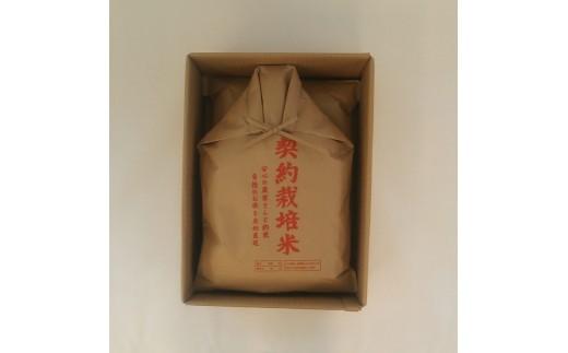 015002 もっちり米 精米10㎏