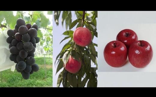 D-1:桑折季節の果物セット