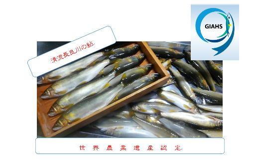 T21-02 鮎釣年間遊漁証