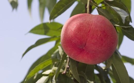 C-1:もも(あかつき) 5㎏ 「献上桃の郷」ブランド品