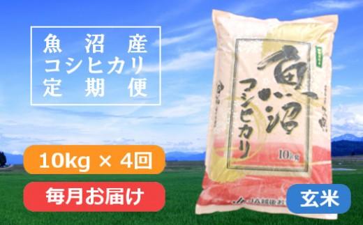 魚沼産コシヒカリ特別栽培米定期便「玄米」10kg×4回/毎月お届け