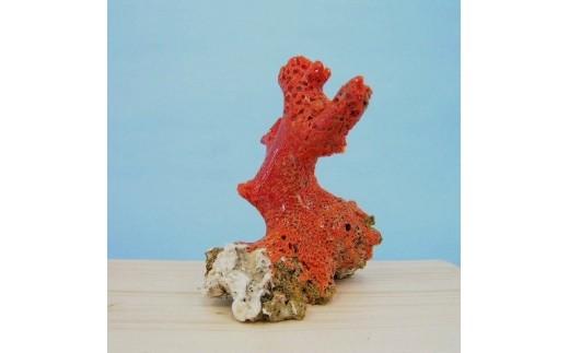 [027307]珊瑚職人館の珊瑚の原木・拝見・置物18