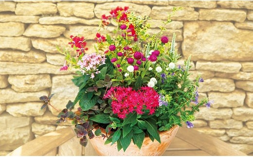 寄せ植えコンテスト豊橋市長賞受賞者による 『季節の寄せ植え』 ※11~5月出荷限定