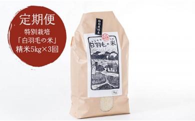 【定期便/全3回】農家直送!魚沼産コシヒカリ 特別栽培「白羽毛の米」精米15kg