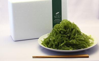 【頒布会】海ぶどう 定期便(10回)