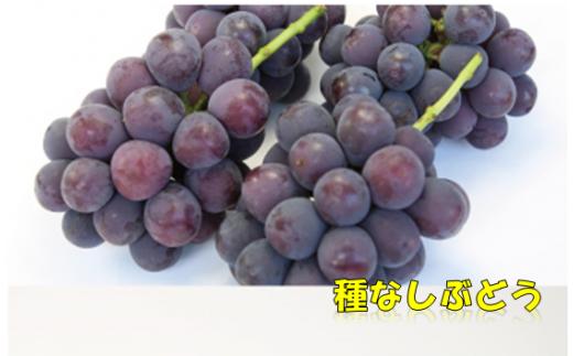 B157 中村柿ぶどう園 ピオーネ2kg
