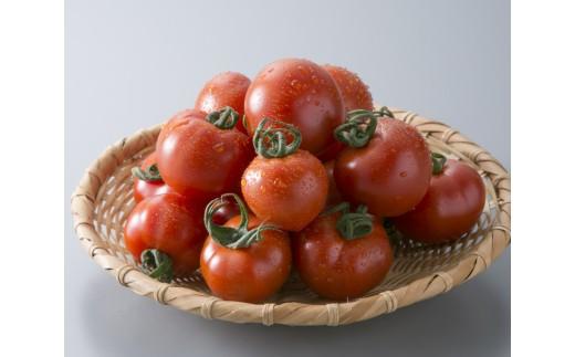B13 めぐみでぃトマト(越のルビー)[髙島屋選定品]