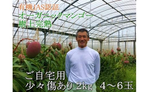 有機JAS認証 オーガニックマンゴー樹上完熟2kg(ご自宅用)4~6玉