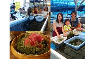 海ぶどう つみとり体験、海ぶどう丼 セット