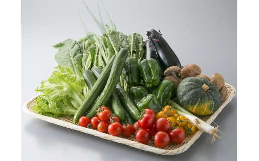 E3 小浜市の野菜セット 頒布会[髙島屋選定品]