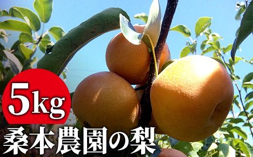 KW004 伊万里・桑本農園のあま~い梨「愛宕(あたご)」5kg
