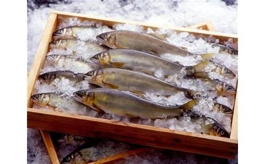 (77) 天然鮎(6~9尾  約400g)