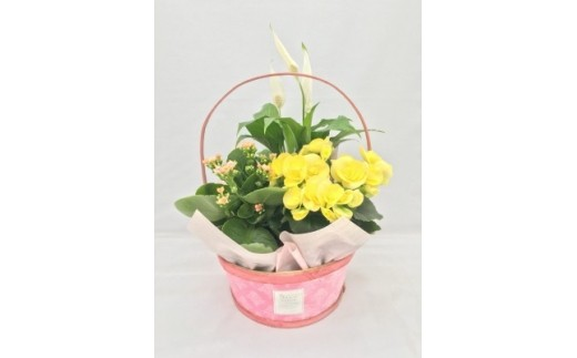 (42)季節の寄せカゴ(ベゴニア・カランコエ・季節の花)