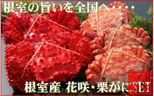 CA-19015 【北海道根室産】花咲ガニとクリガニの食べ比べ5~6尾(計1.5kg前後)