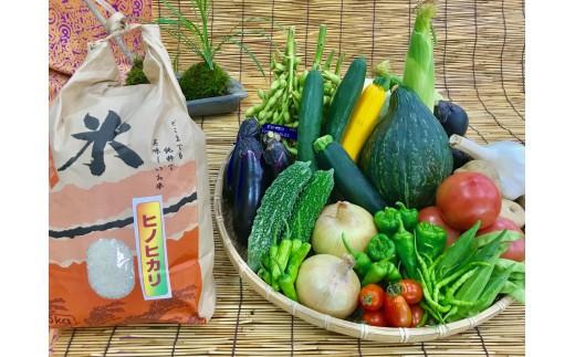 [№5545-0044]産地直送!新鮮とれたて夏野菜&ひのひかり5Kgセット