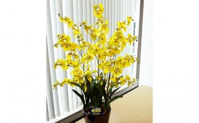 [№5809-2308]光触媒アートフラワー(造花)オンシジウム黄6本立