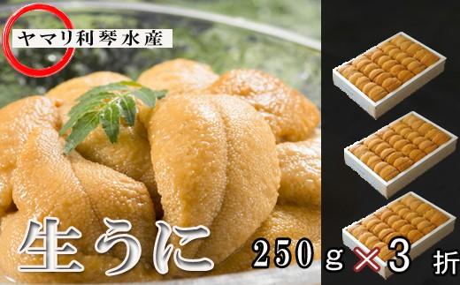 CD-34002 ムラサキウニ250g×3折