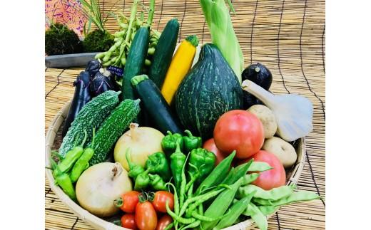 [№5545-0040]産地直送!新鮮とれたて夏野菜セット