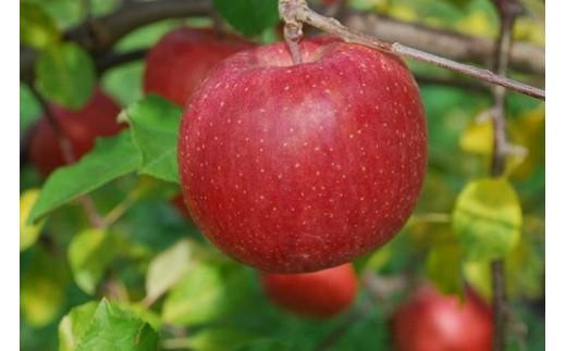 A801 りんご「サンふじ」10kg(訳ありお徳用・糖度13度以上保証)