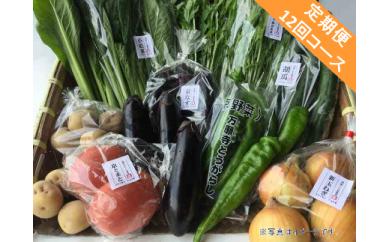 【定期便】旬の京野菜 毎月お届けBコース (全12回)