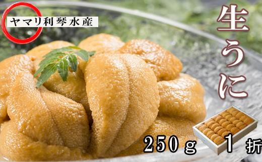 CC-34011 ムラサキウニ250g×1折